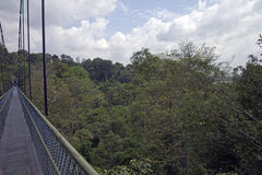 机盖步行通过雨林 免版税库存图片