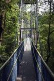 机盖步行通过雨林 免版税库存照片