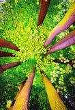 机盖结构树 库存图片