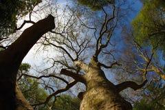 机盖老s结构树 免版税图库摄影