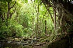 机盖被过滤的阳光在雨林密林 库存照片