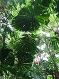 机盖雨林 免版税图库摄影