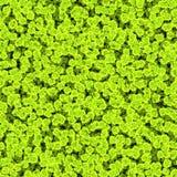 杀害危险橙黄色细胞或病毒球形在肮脏的水中 微观世界 图库摄影