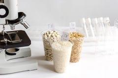 杀虫剂的测试在谷物在实验室 库存图片