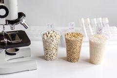 杀虫剂的测试在谷物在实验室 库存照片