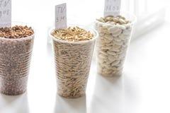 杀虫剂的测试在谷物在实验室 免版税图库摄影