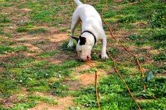 杂种犬在庭院,白色狗使用 库存照片