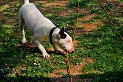 杂种犬在庭院,白色狗使用 免版税库存照片
