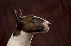 杂种犬头射击 库存照片