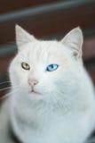 杂种猫 库存图片