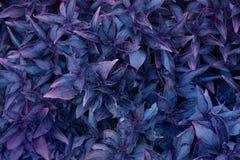 杂色的多汁植物背景 免版税库存图片