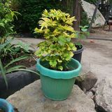 杂色的植物 库存照片