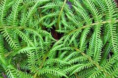 杂色的绿色蕨叶子 库存图片