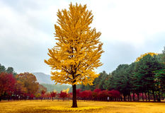 杂色美丽的树 免版税库存照片