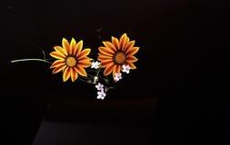 杂色菊属植物色黄色和红色花 库存照片
