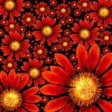 杂色菊属植物 免版税库存图片