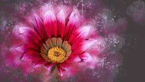 杂色菊属植物 图库摄影