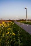 杂草可以是美丽的 免版税库存图片