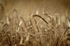 杂草在夏天 库存照片