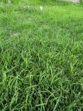 杂草在沙漠 免版税库存照片