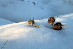 杂草在第一雪种植 免版税图库摄影