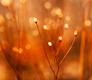杂草的芽在阳光下 免版税图库摄影