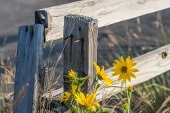 杂草被接管的老木篱芭 图库摄影