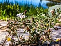杂草通过裂缝 库存照片