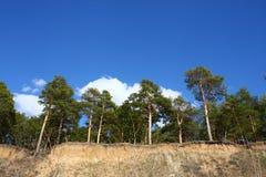 杉木倾斜陡峭高 免版税库存照片