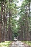 杉木公园在清迈 图库摄影