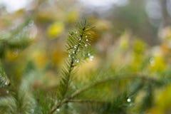 杉木分支在11月作为抽象艺术品的秋天森林里与b 库存照片