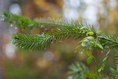 杉木分支在11月作为抽象艺术品的秋天森林里与b 库存图片