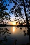杉木剪影日落结构树 库存照片