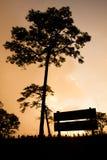 杉木剪影 库存图片
