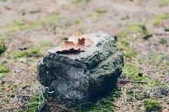杉木吠声和混凝土片断的一个异想天开的组合  自然自然和人工地被创造的石 软和易碎在a 库存图片