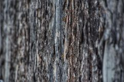 杉木吠声背景或纹理 库存图片