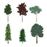 杉木和叶子树例证的汇集 库存例证