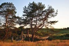杉木和吊桥在日落 免版税库存照片
