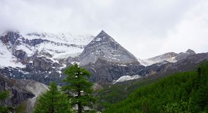 杉木和多雪的山 图库摄影