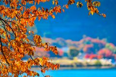 杉木和天空在旅行期间向富士山 库存图片