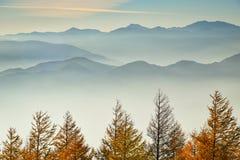 杉木和天空在旅行期间向富士山 免版税图库摄影