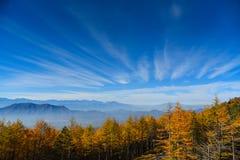 杉木和天空在旅行期间向富士山 免版税库存图片