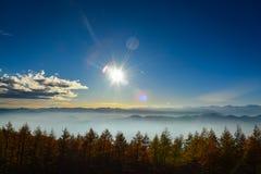杉木和天空在旅行期间向富士山 免版税库存照片