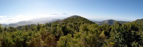 杉木和山风景在特内里费岛 免版税库存图片