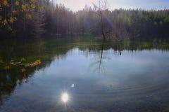 杉木和树在池塘银行  免版税图库摄影