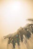 杉木和火光分支在背景太阳光芒的与干净的地方的标签的 设色,葡萄酒作用 免版税库存照片