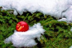 杉木和苹果 库存照片