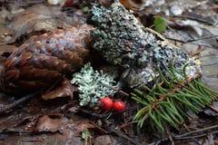 杉木和莓果 库存照片
