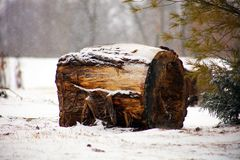 杉木和雪在冬天降雪的树期间,日志在雪下 美丽的概念礼服女孩纵向佩带的空白冬天 免版税库存照片