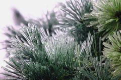 杉木在冰的锥体cought 图库摄影